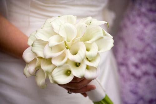 Bridal Flower Plants : Sarah pepper exclusive unique bridal flowers